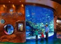 silverton-casino
